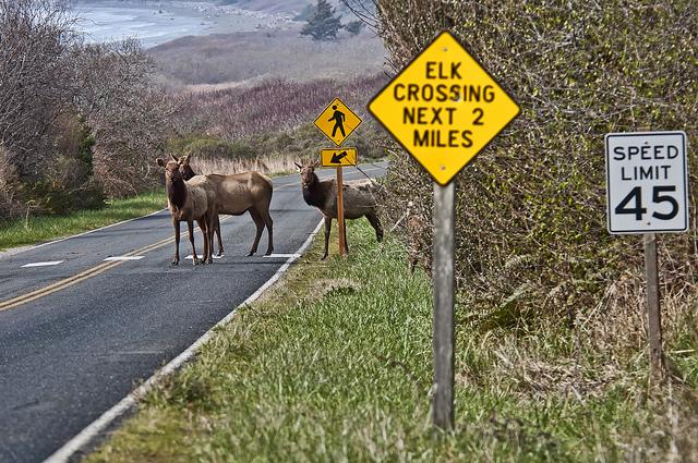 Obedient Elk