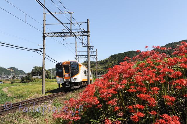 DSC 0184
