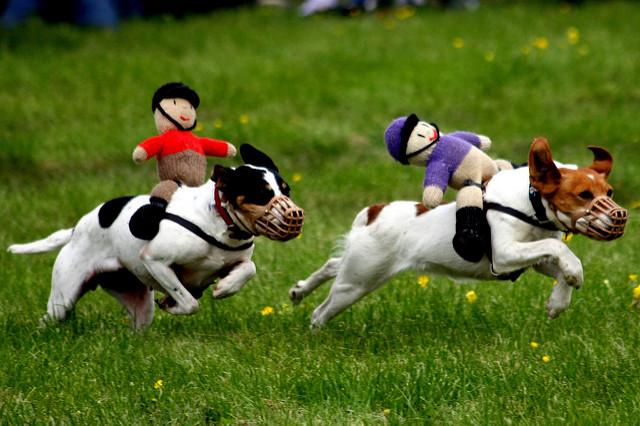 Racing Terriers